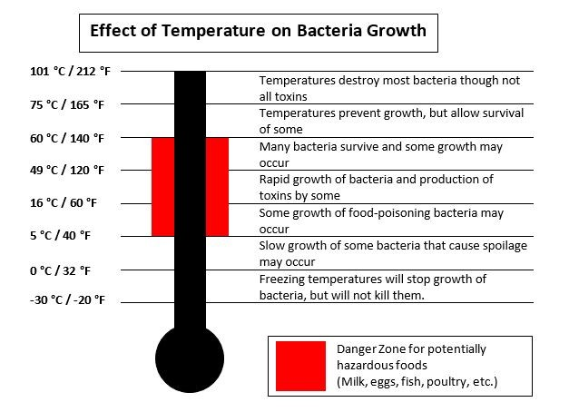 Effect of Temperature on Bacteria Growth