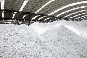 Paper Pulp Production
